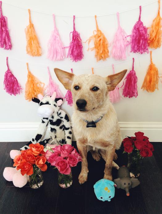 birthday-puppy-party-6
